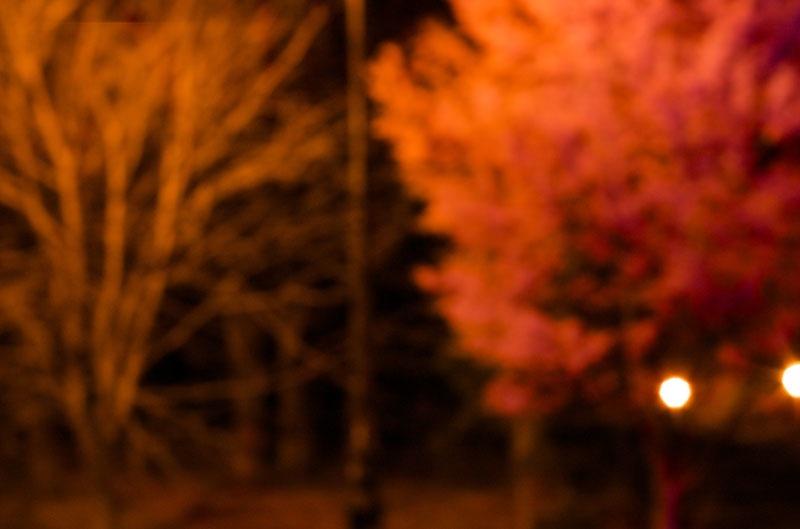 night_blossoms.jpg