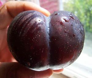 plum(p)